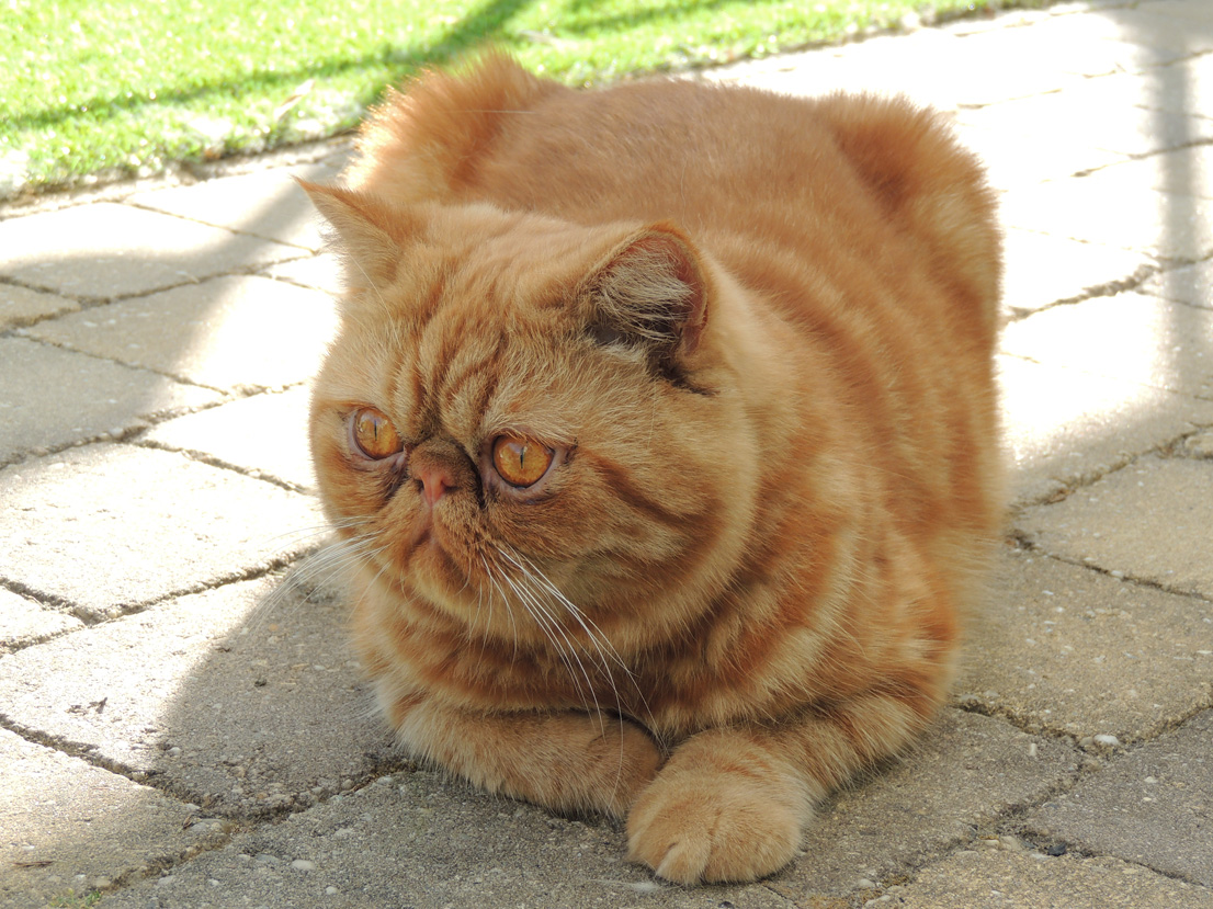 poes Garfield
