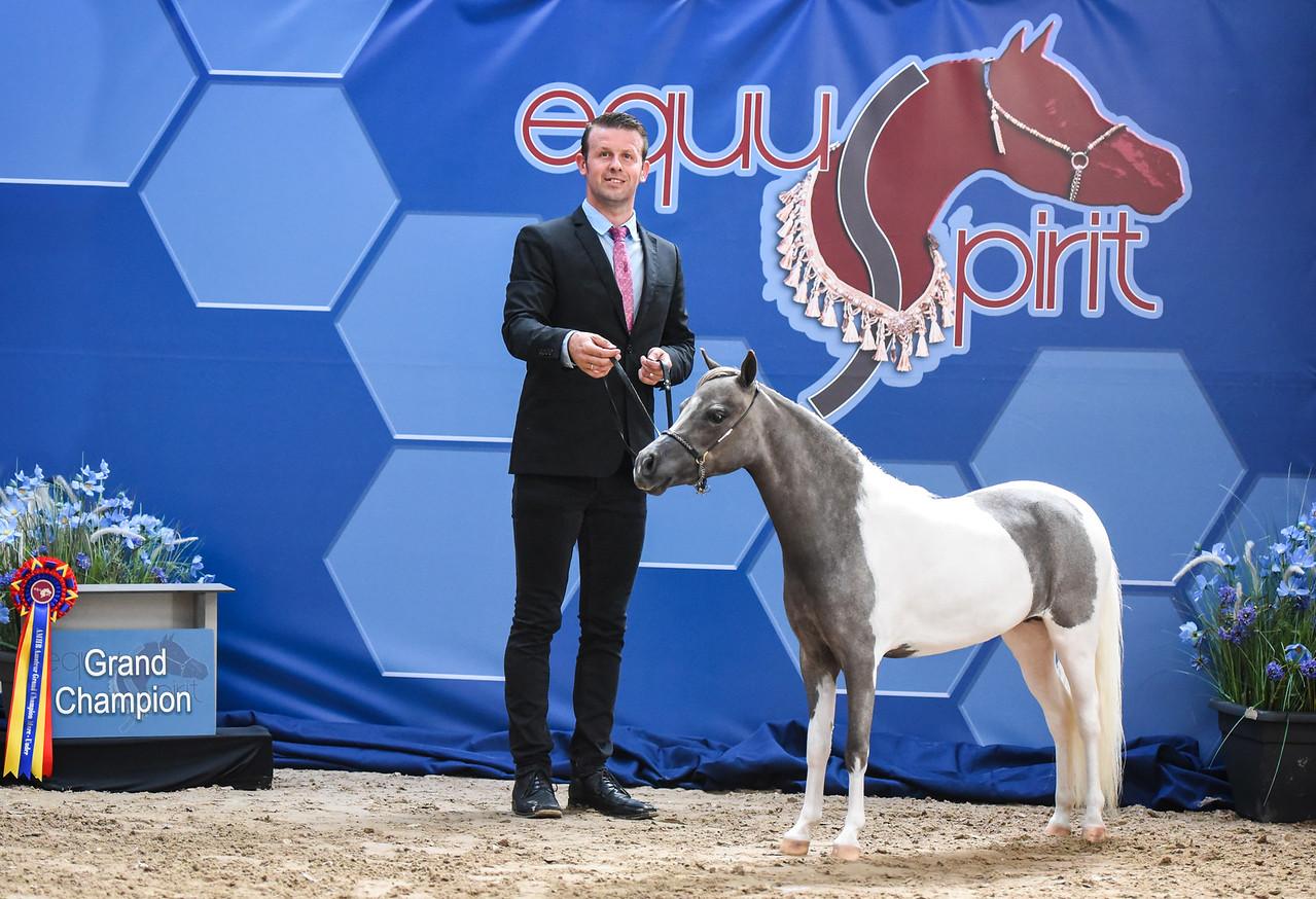 Equuspirit - diva - miniheaven