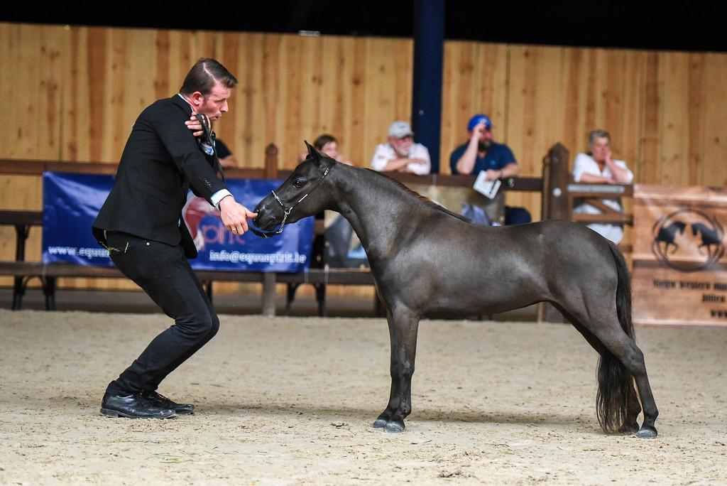 Equuspirit - milly - miniheaven